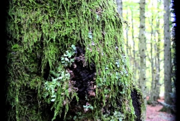 00-02-14-00 (arbre)